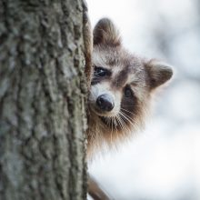 Protecting Your Home from Critters